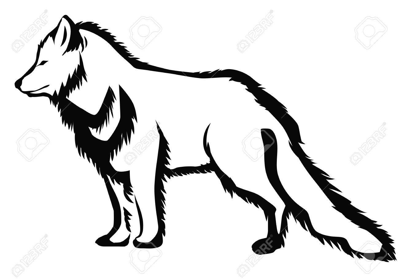 Line Drawing Fox : Arctic fox abstract silhouette on white background royalty free