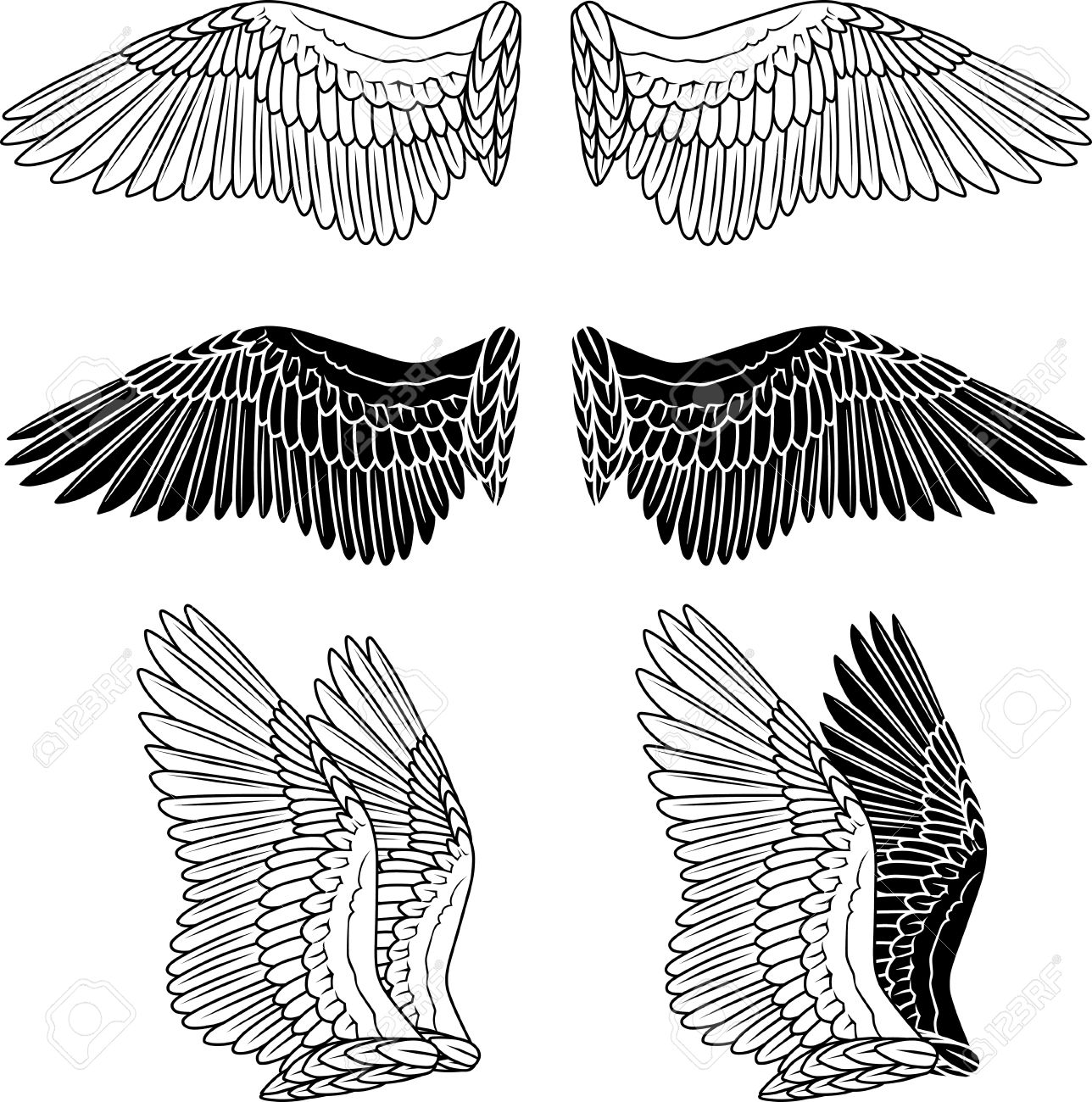 Pigeon wings isolated on white Stock Vector - 10824114