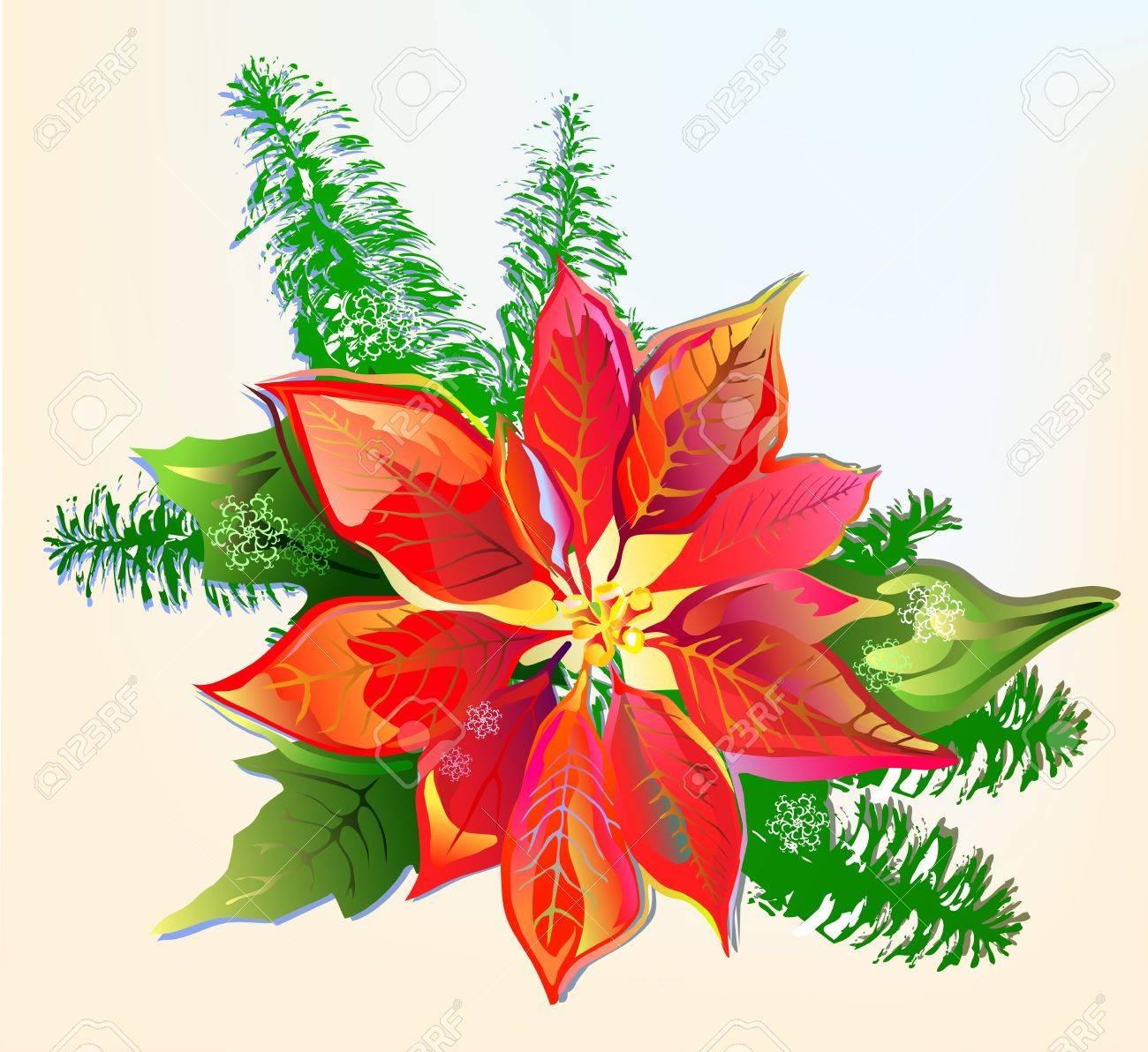 Christmas Poinsettia Stock Vector - 11357664