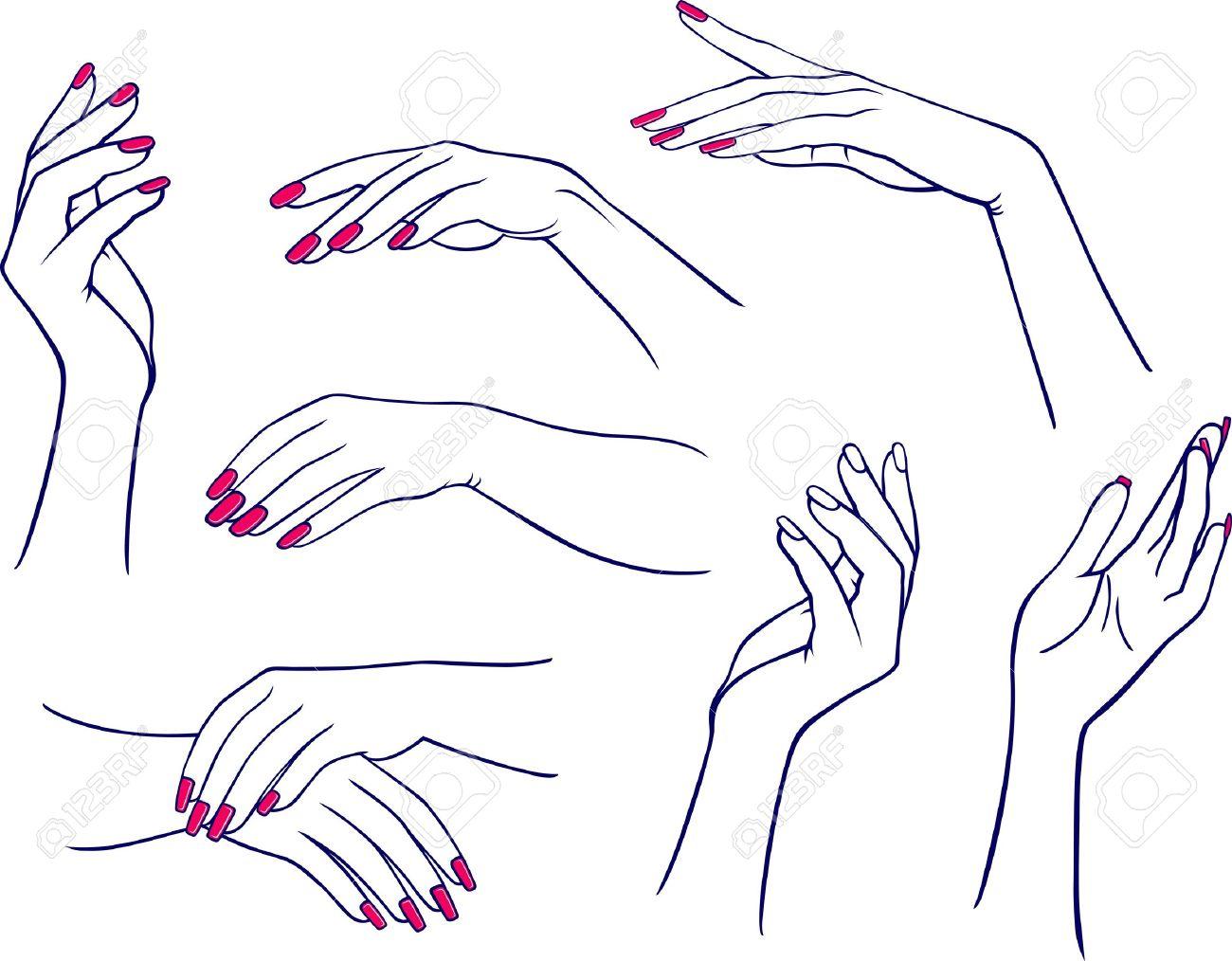 Woman hands - 11357814