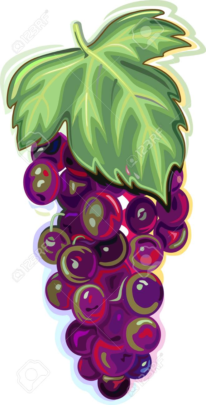 Branch of blue grapes with leaf isolated on white background Stock Vector - 13247340