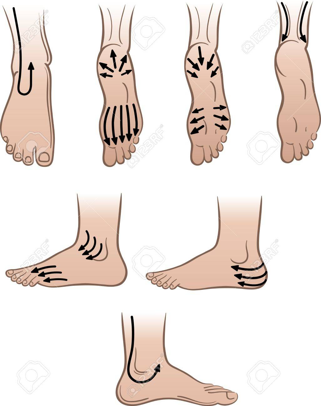 Closeup man feet with massaging lines (vector illustration) Stock Vector - 13683700