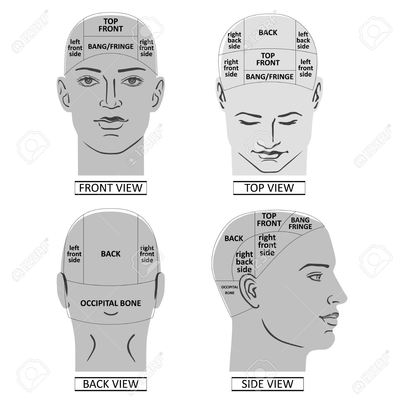 Man head divisions scheme template of front, back, top, side..
