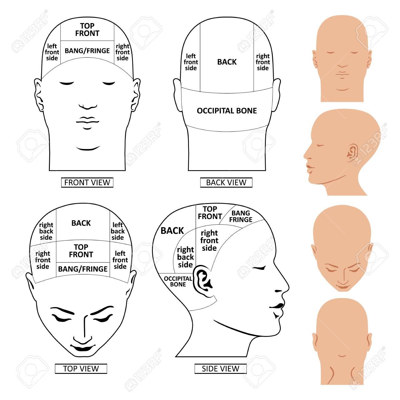 Mannkopf teilt Entwurfsschablone Front, Rückseite, Spitze,  Seitenansichten, die Vektorillustration ein, die auf weißem Hintergrund  lokalisiert wird
