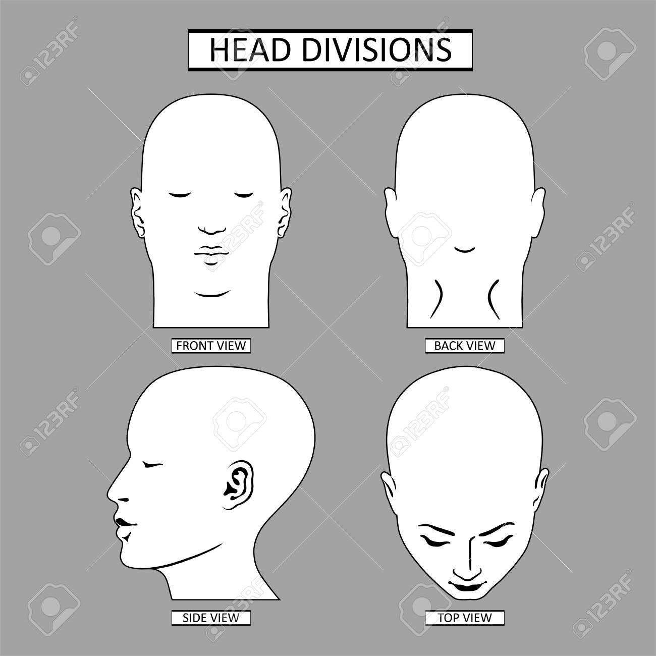Man head divisions scheme template front, back, top, side views,..