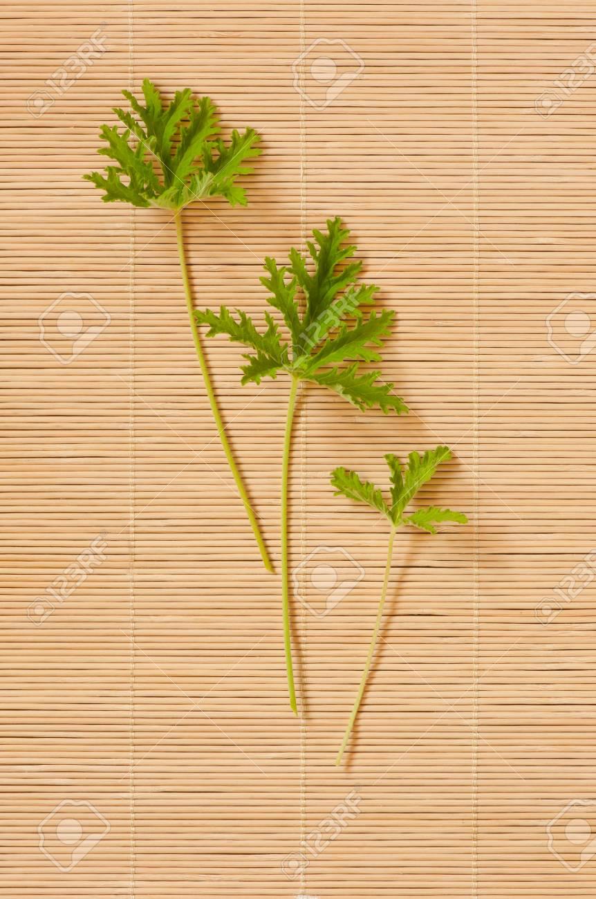 Pelargonium citrosum cut three leaves, minimalism, plant called