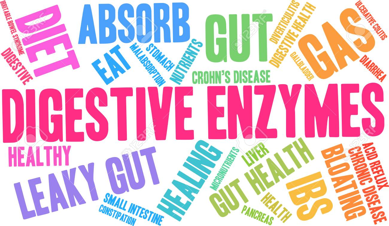 Digestive Enzymes word cloud on a white background. - 89038977