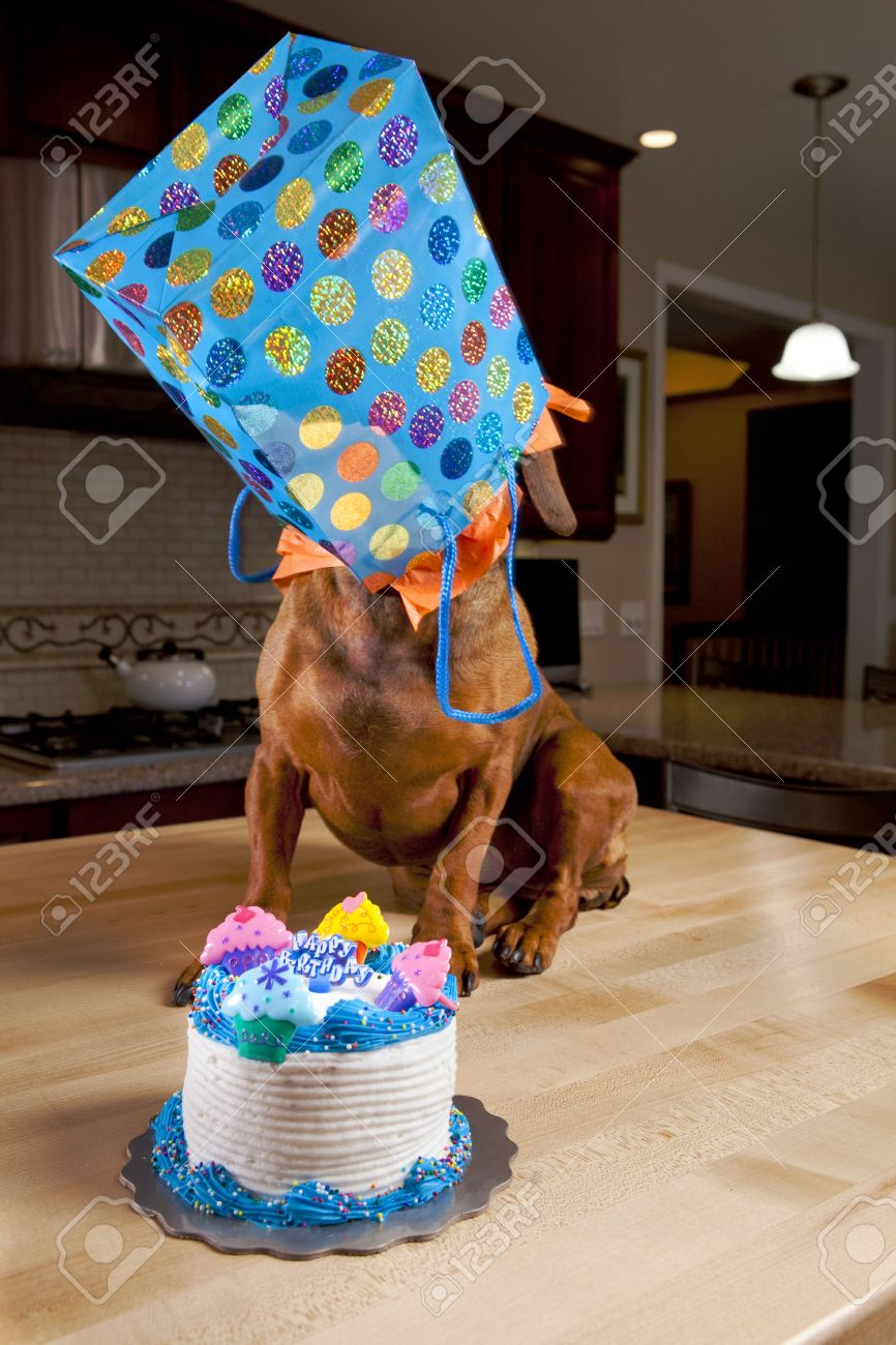 Astonishing Dog With Birthday Cake And Gift Stock Photo Picture And Royalty Personalised Birthday Cards Paralily Jamesorg