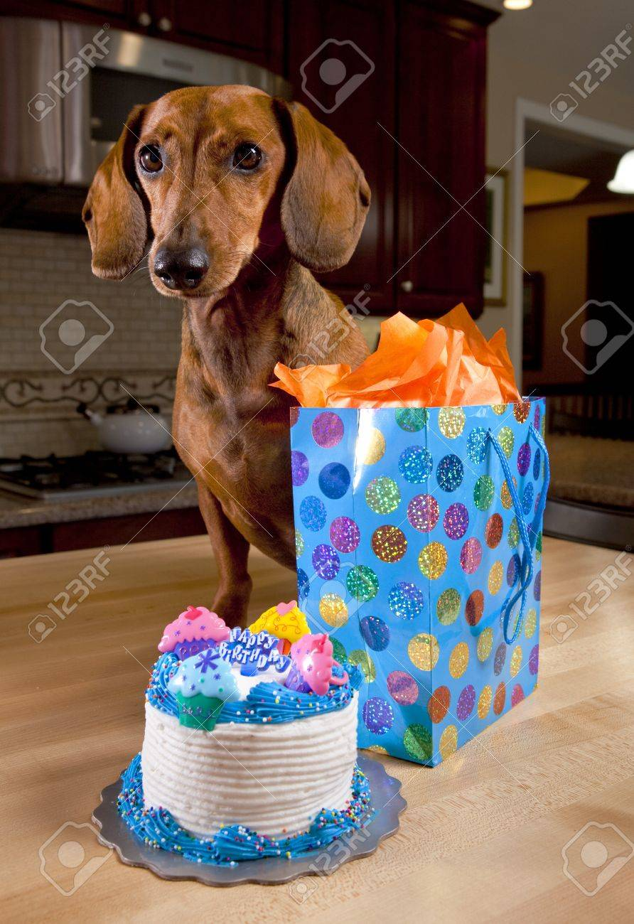 Prime Dog With Birthday Cake And Present Stock Photo Picture And Personalised Birthday Cards Paralily Jamesorg