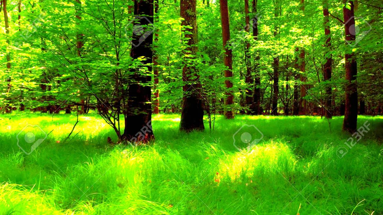 A woods during the spring, a beautiful natural and quiet scene - 143168751