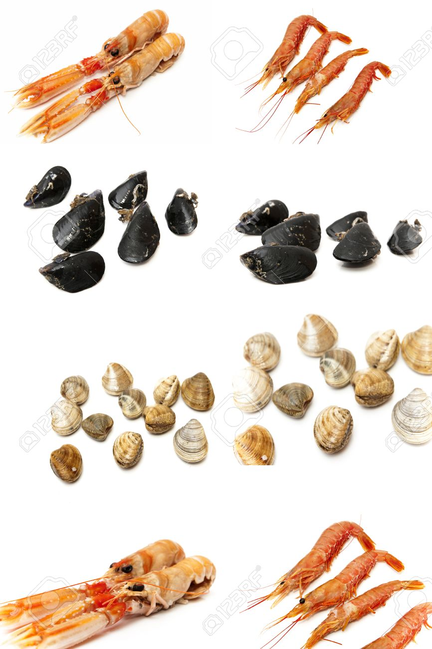 e1c3c7955d4e63 collage types of seafood and shellfish on a white background Stock Photo -  22226862