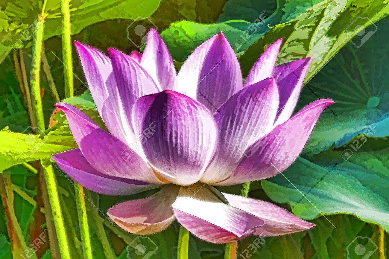Artistic colorful lotus flower graphism stock photo picture and artistic colorful lotus flower graphism stock photo 65638621 mightylinksfo