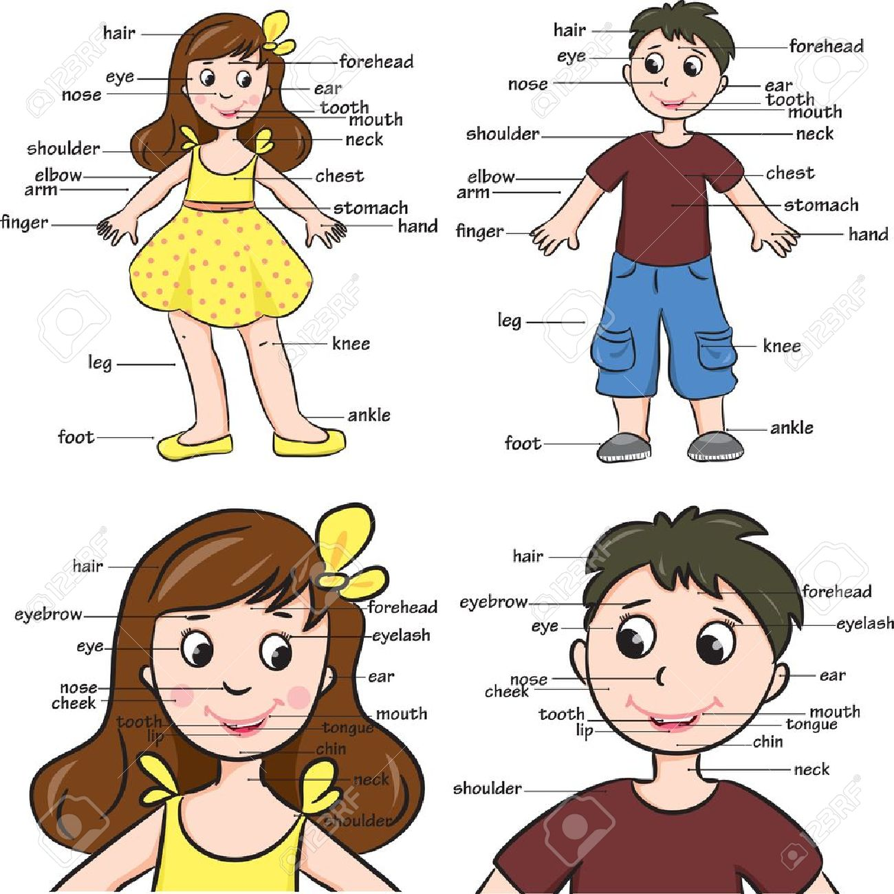 Cartoon Boy And Girl Vocabulary Of Body Parts Royalty Free Cliparts