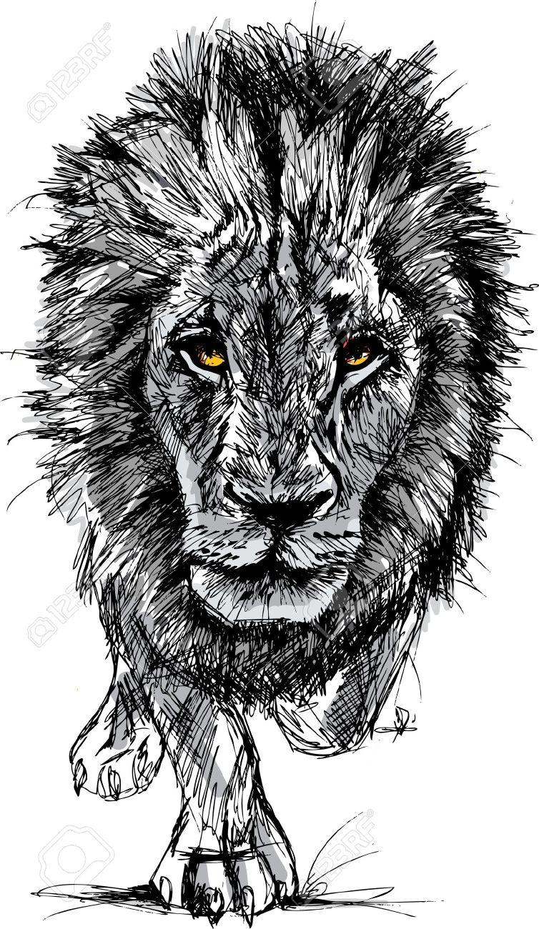 Croquis d'un grand lion d'Afrique masculin. Banque d'images - 15081377