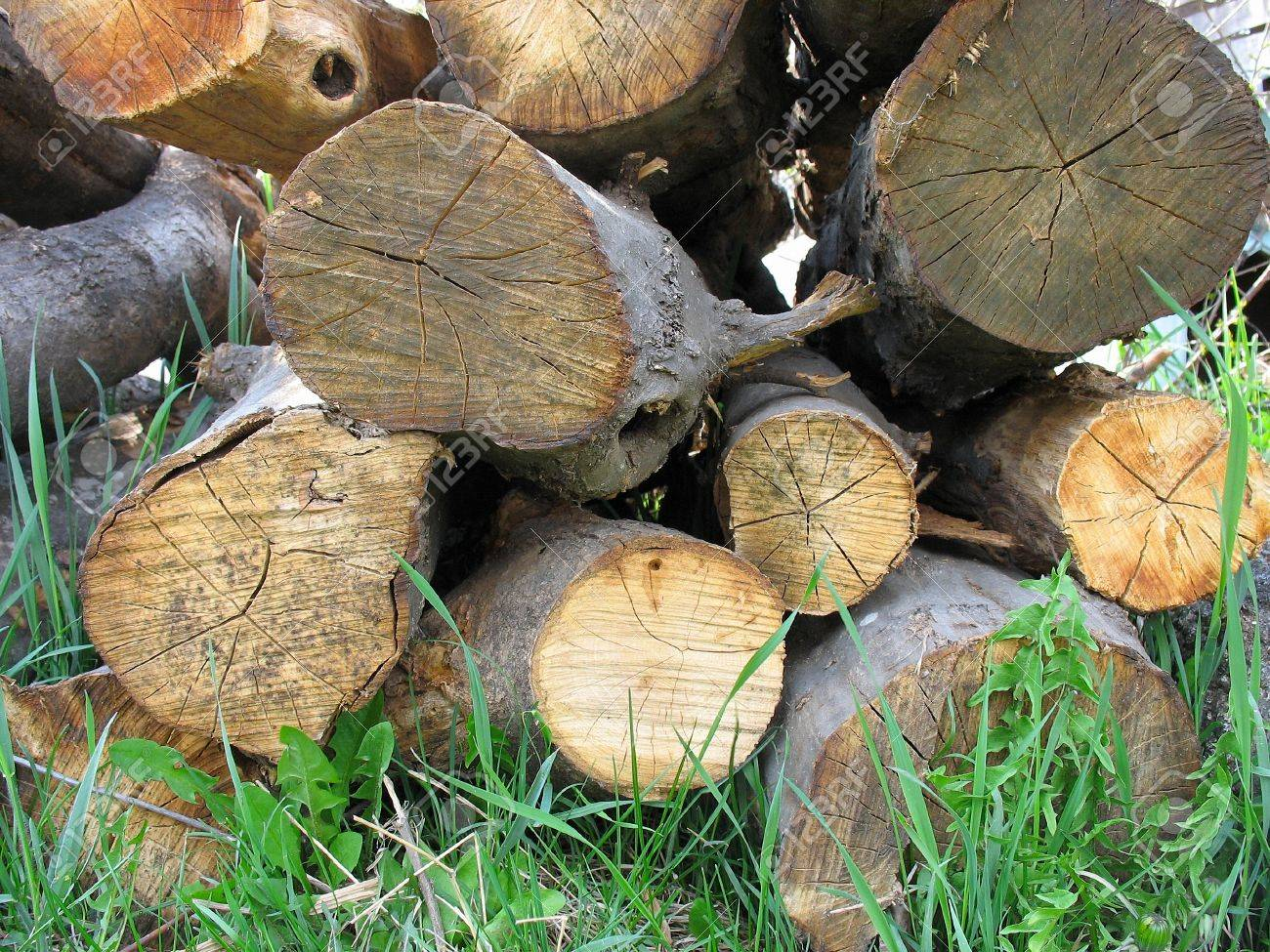 Stacked old yellow wood tree logs on grass Stock Photo - 9427060