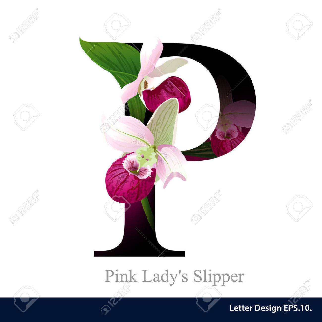 Letter P Vector Alphabet With Pink Ladys Slipper Flower Abc Concept Type As Logo