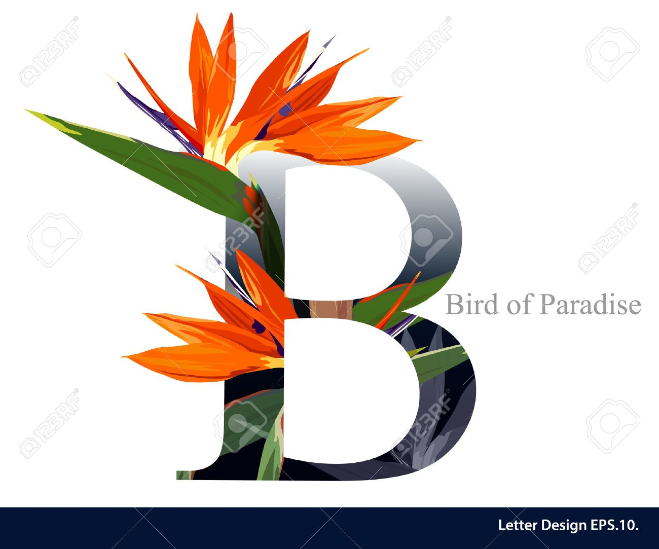 Letter B & Stock Royalty Free Letter B s And