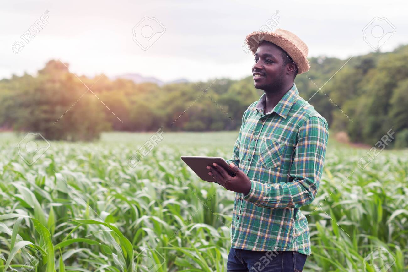 African Farmer stand in the green farm with holding tablet - 128618711
