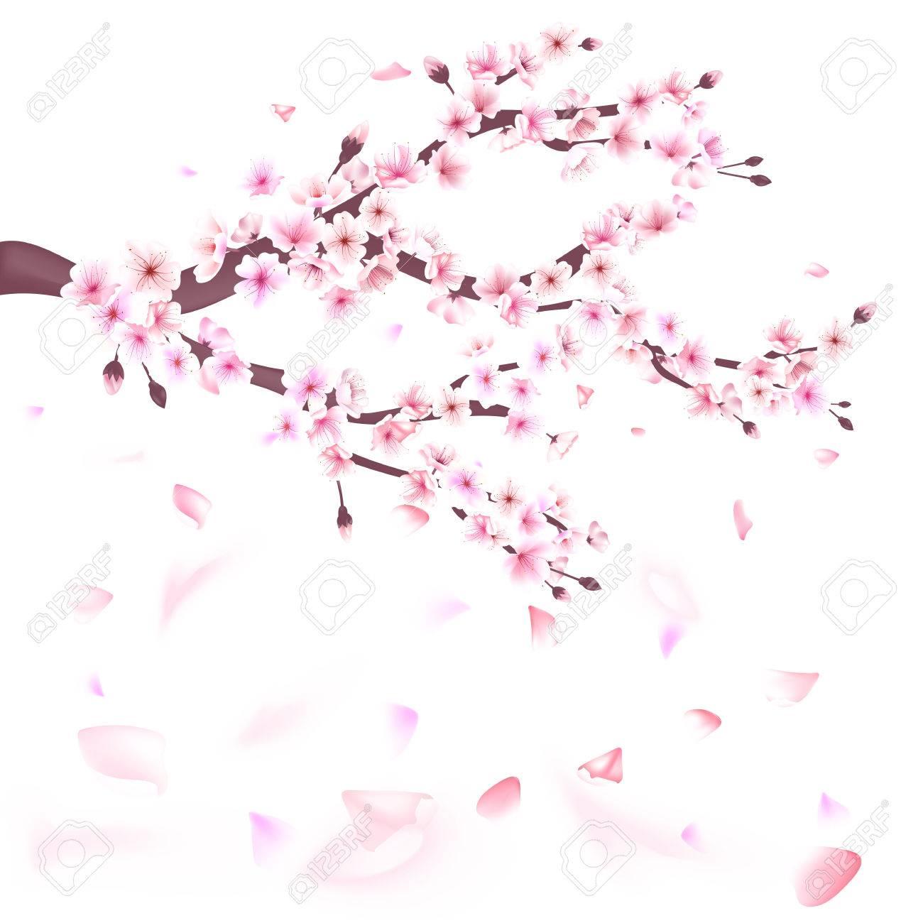 リアルな桜咲く枝の花のイラストのイラスト素材ベクタ Image 70078129