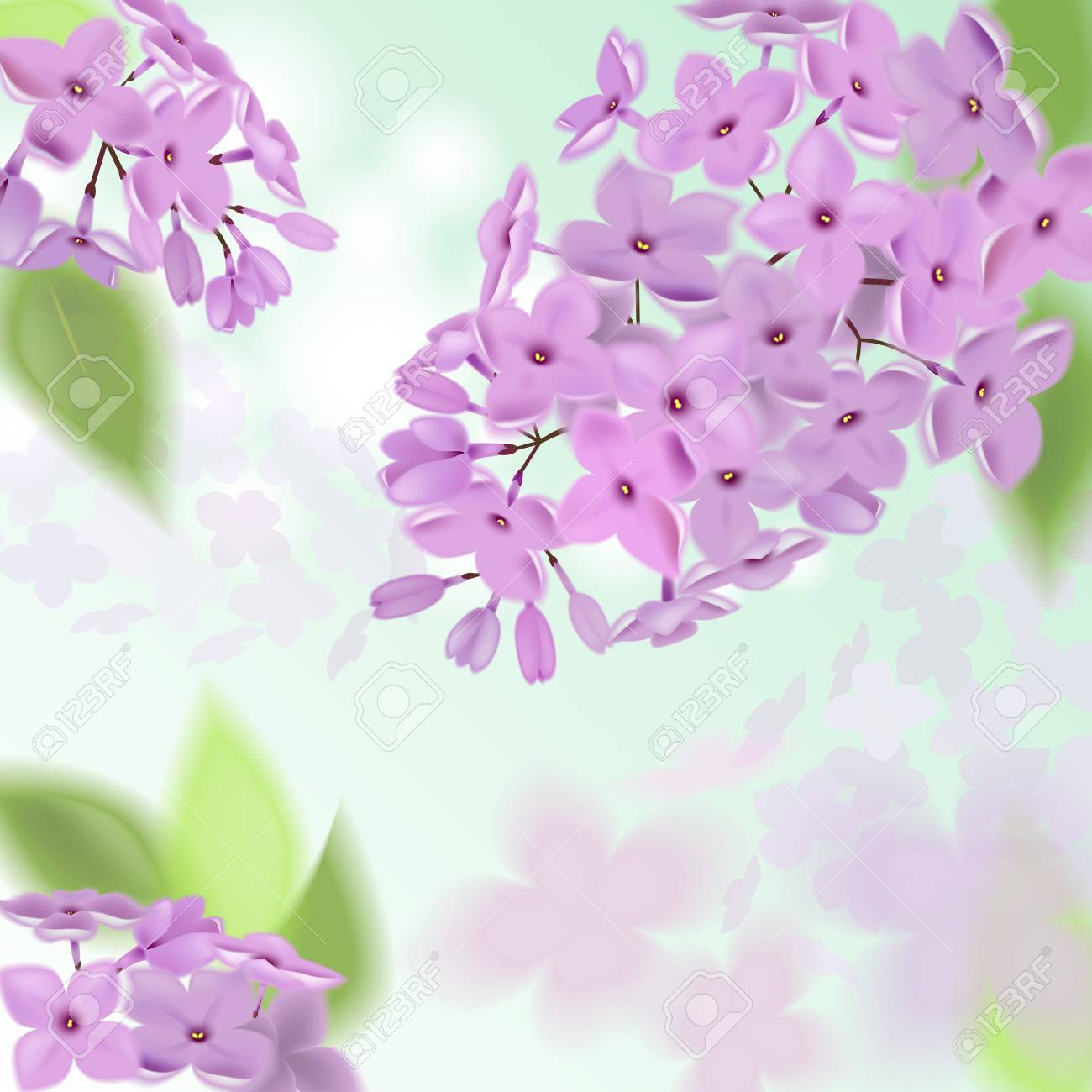 Spring Background With Pink And Purple Flowers Of Lilac Can