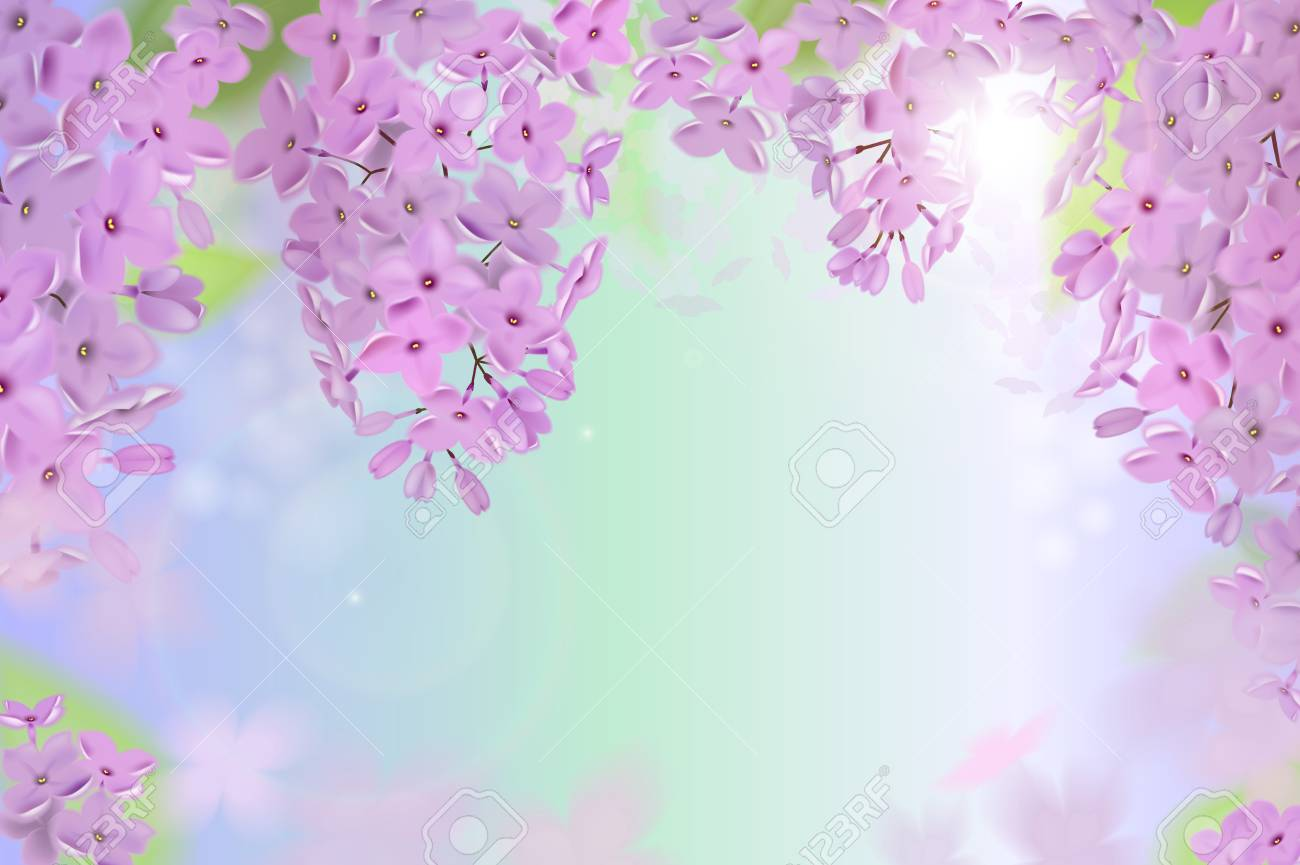 Spring Background With Pink And Purple Flowers Of Lilac Flowers