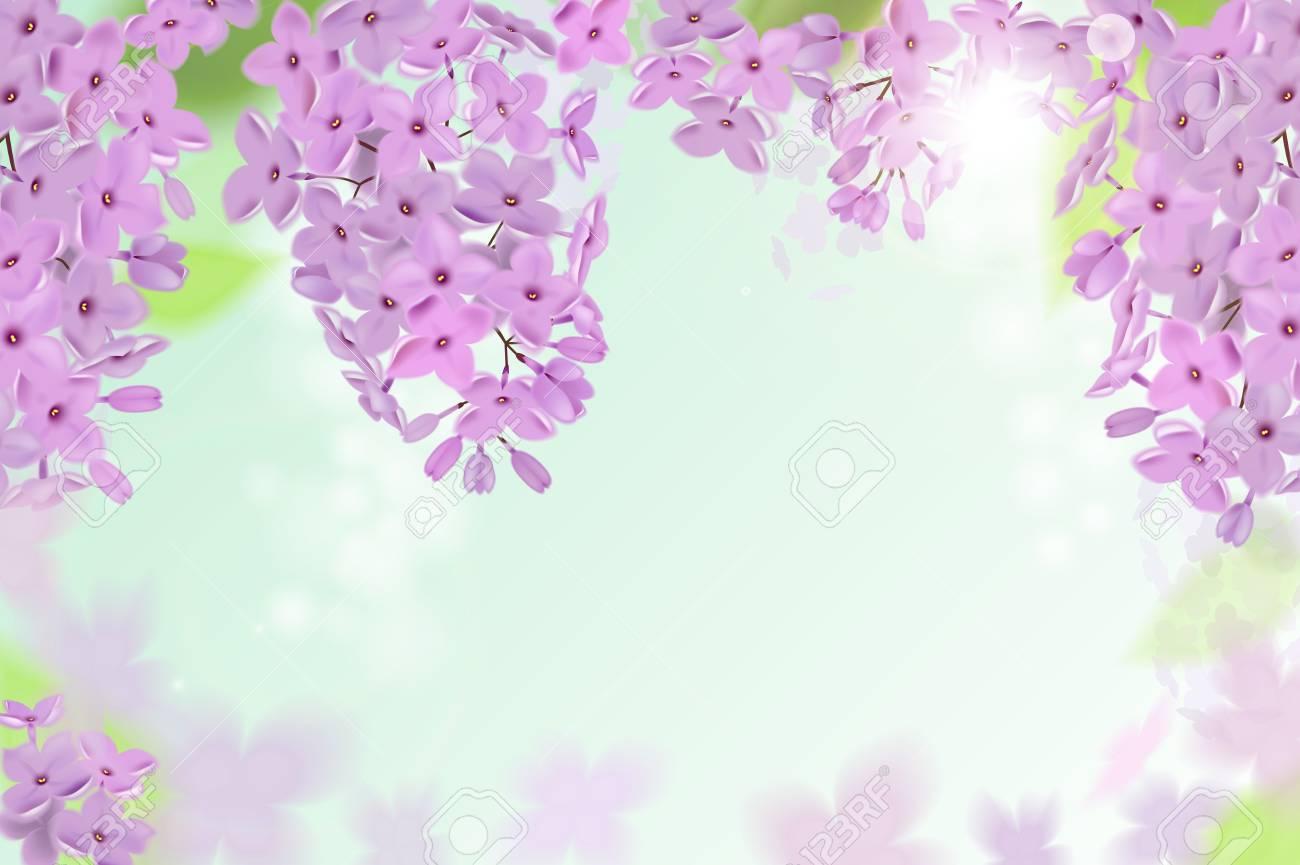 Carta Da Parati Fiori Rosa : Sfondo di primavera con fiori rosa e viola di lilla. può essere
