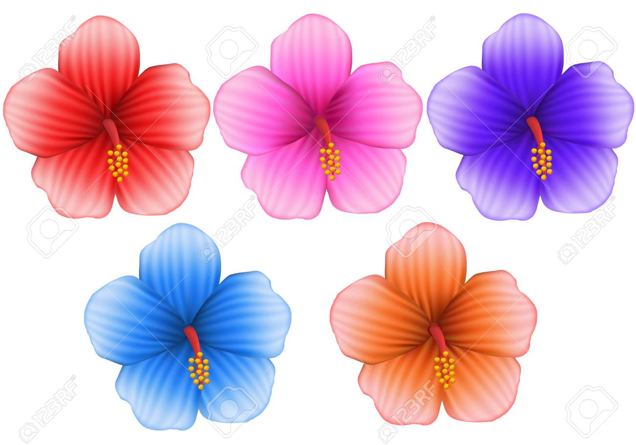 Set Of Tropical Hibiscus Flowers In Different Colors Mesh Gradient