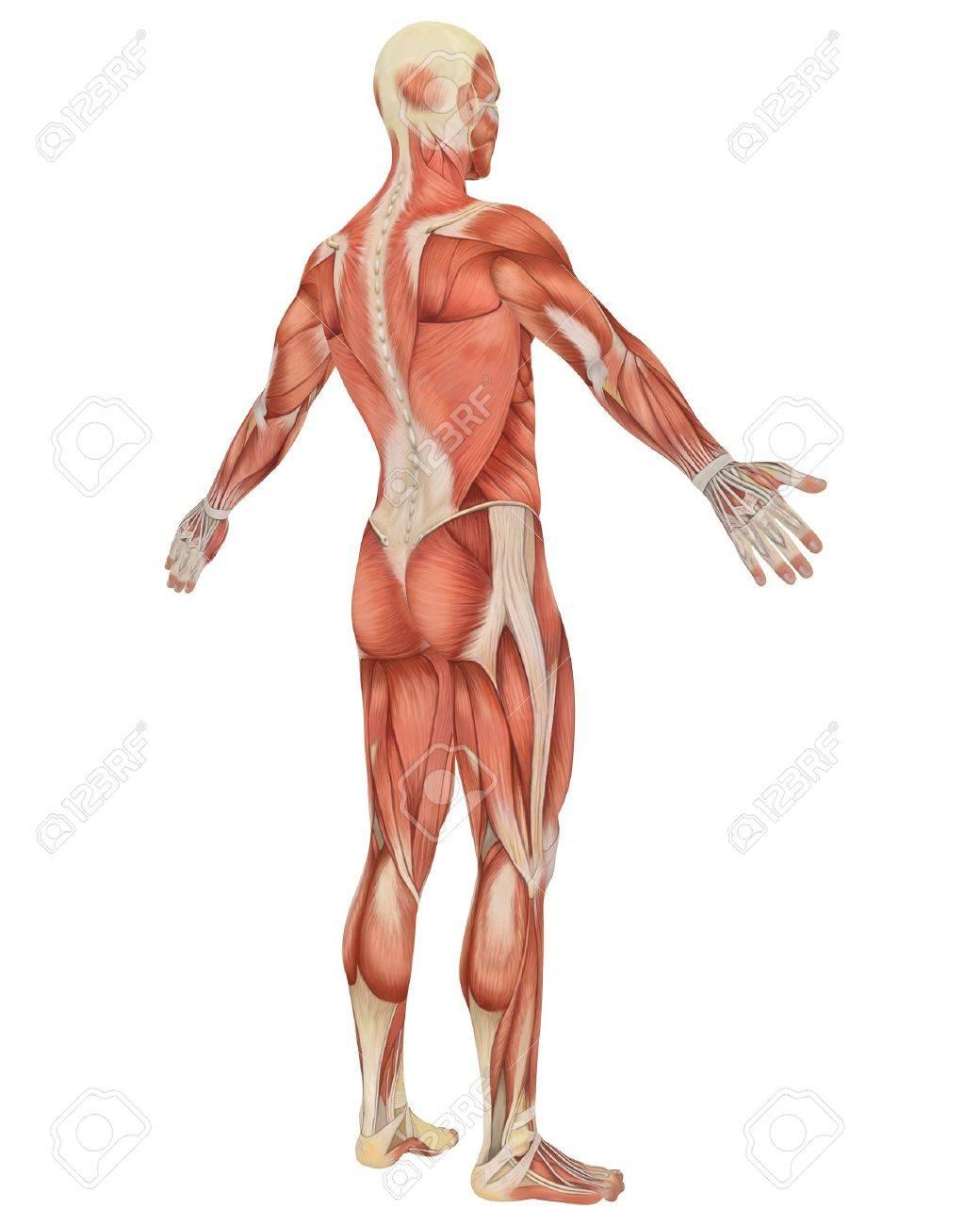 Fantastisch Grau Anatomie Volle Episoden Frei Ideen - Anatomie Ideen ...