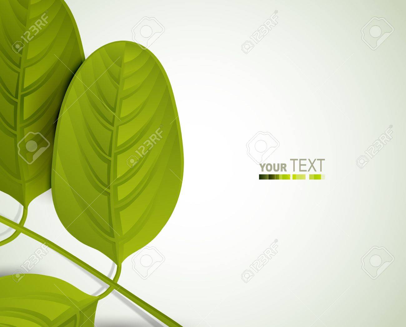 Summer branch with fresh green leaves of acacia Stock Vector - 13751003
