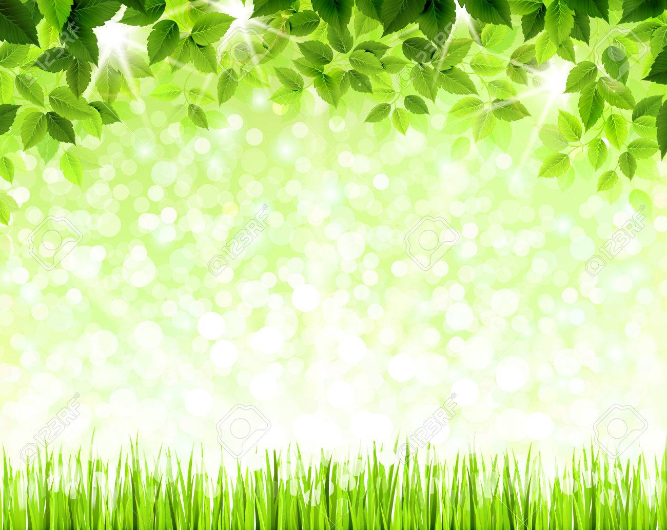 Summer branch with fresh green leaves above the glade Stock Vector - 25161571