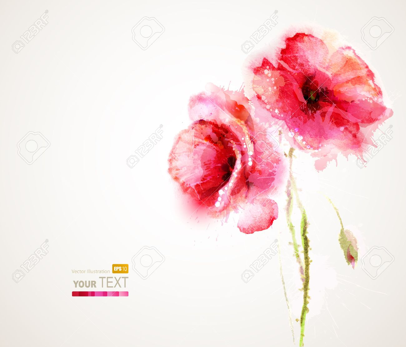 The two flowering red poppies Stock Vector - 25161446