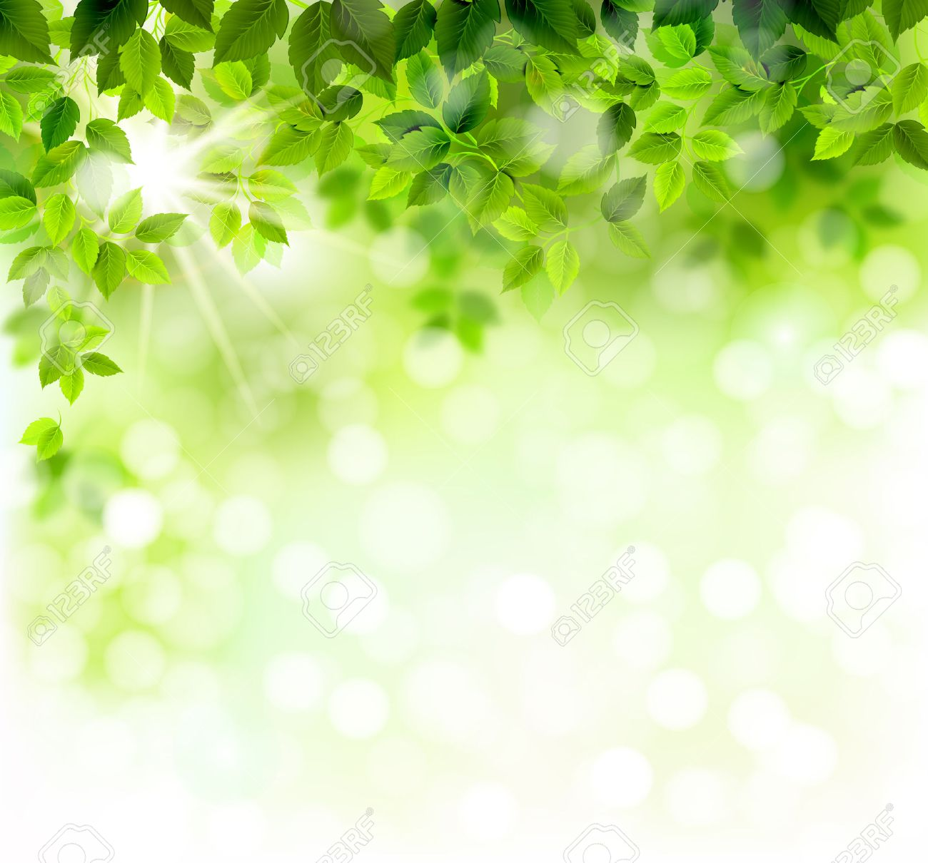 Summer branch with fresh green leaves Stock Vector - 36248789