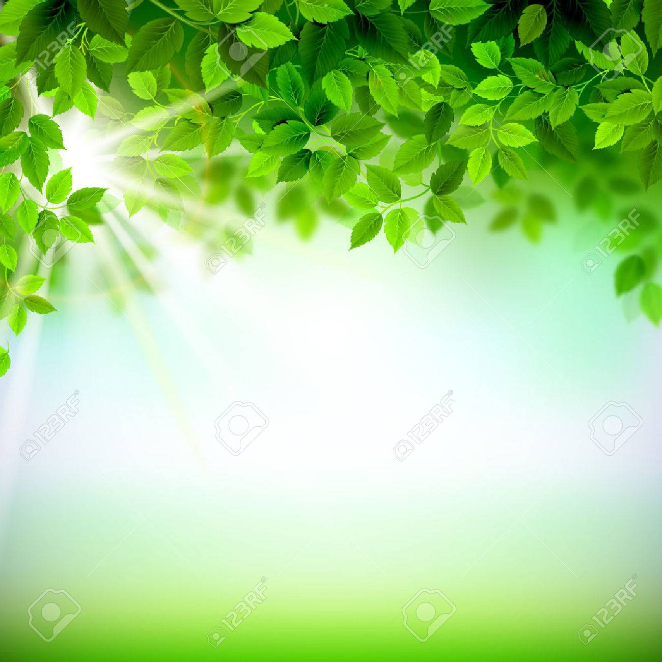 Summer branches with fresh green leaves Stock Vector - 38401798