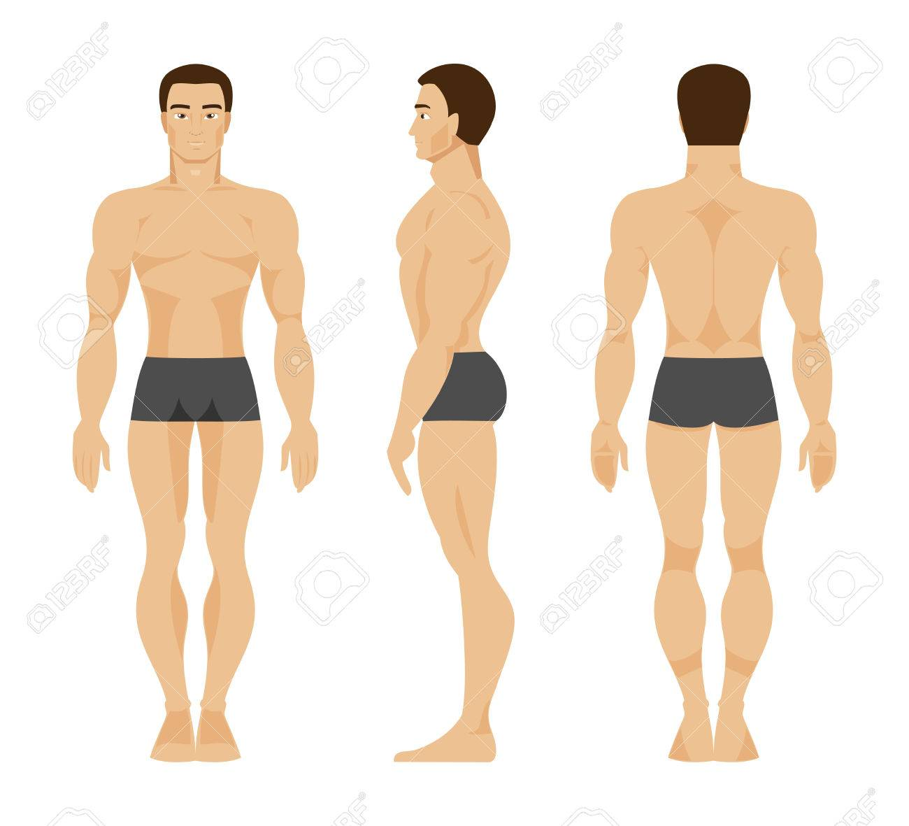 Anatomy of the male body in the front, rear and side - 51059309