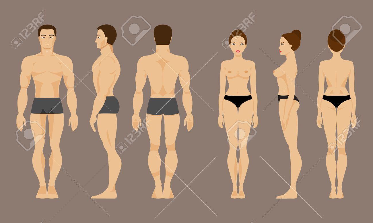 Männliche Und Weibliche Anatomie. Vorne, Hinten Und Seitenansichten ...
