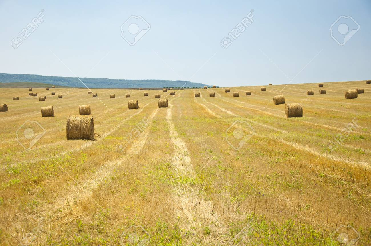 stack of straw on the mown field beneath a blue sky, Tuscany Stock Photo - 7660923