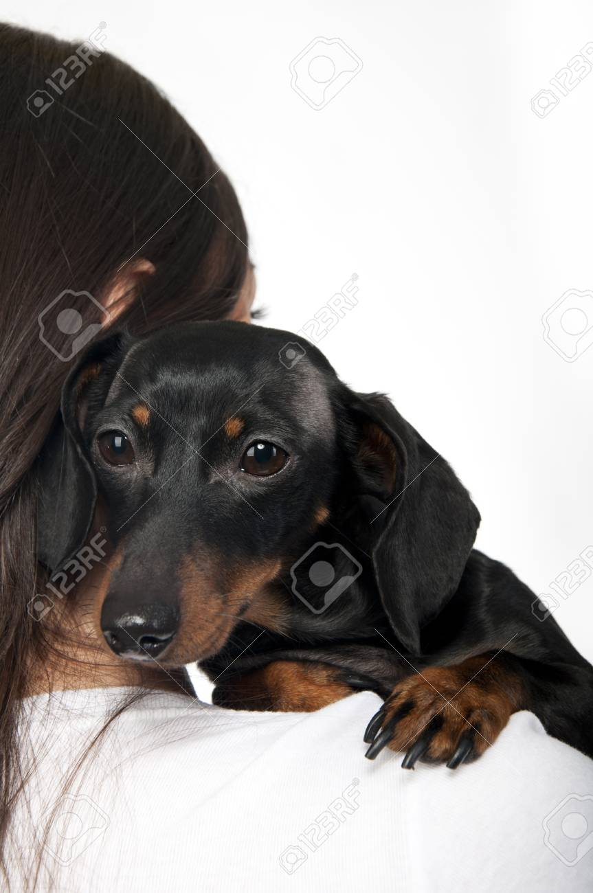 Portrait of black and brown dachshund on the shoulder of a girl Stock Photo - 8864857