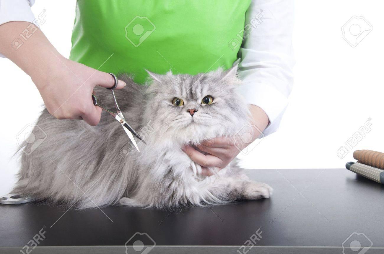 Выбираем машинку для стрижки кошек в домашних условиях 59