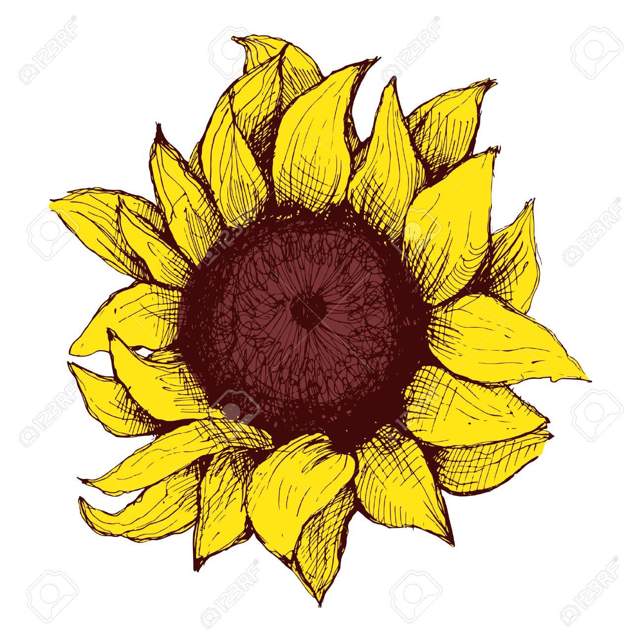 Hand Gezeichnet Sonnenblumen. Blumen-Sonnenblume Mit Gemalten Herzen ...