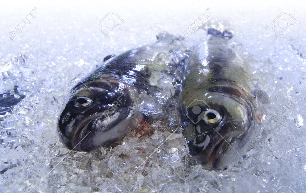 Two fresh trouts are cooled on ice. Stock Photo - 1979373
