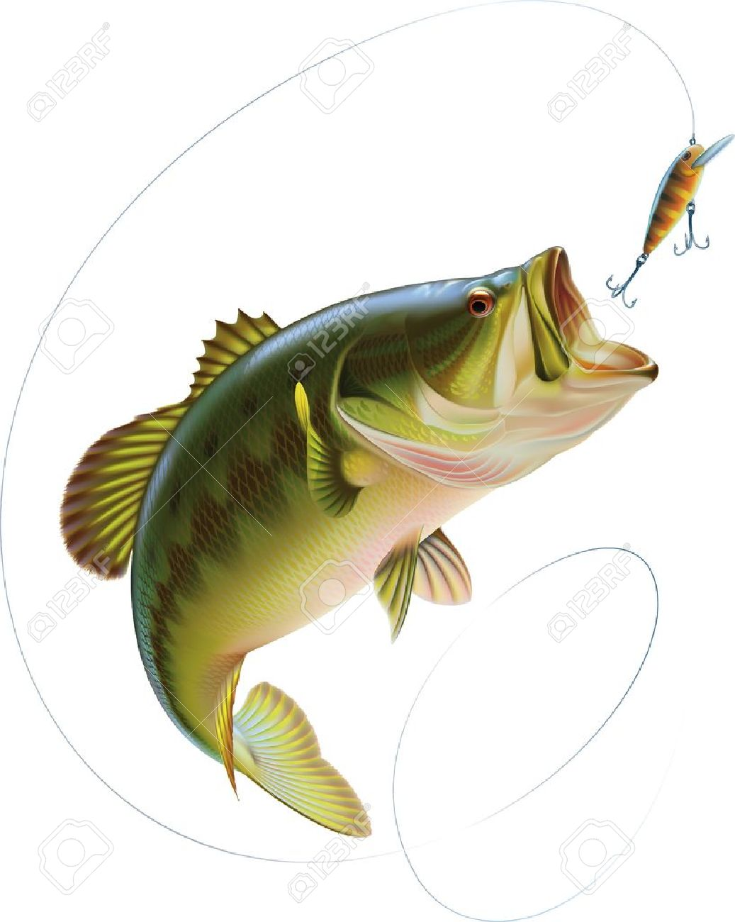 Largemouth bass is catching a bite and jumping in water spray Layered vector illustration - 17805064