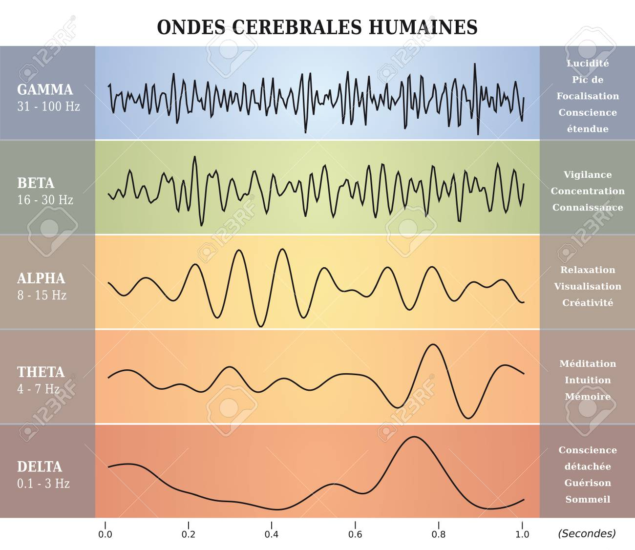 human brain waves diagram / chart / illustration in french stock vector -  98628501