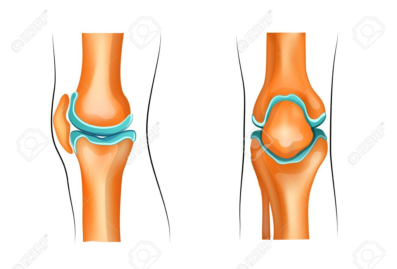 Vector Illustration Of A Healthy Knee Joint Royalty Free Cliparts ...