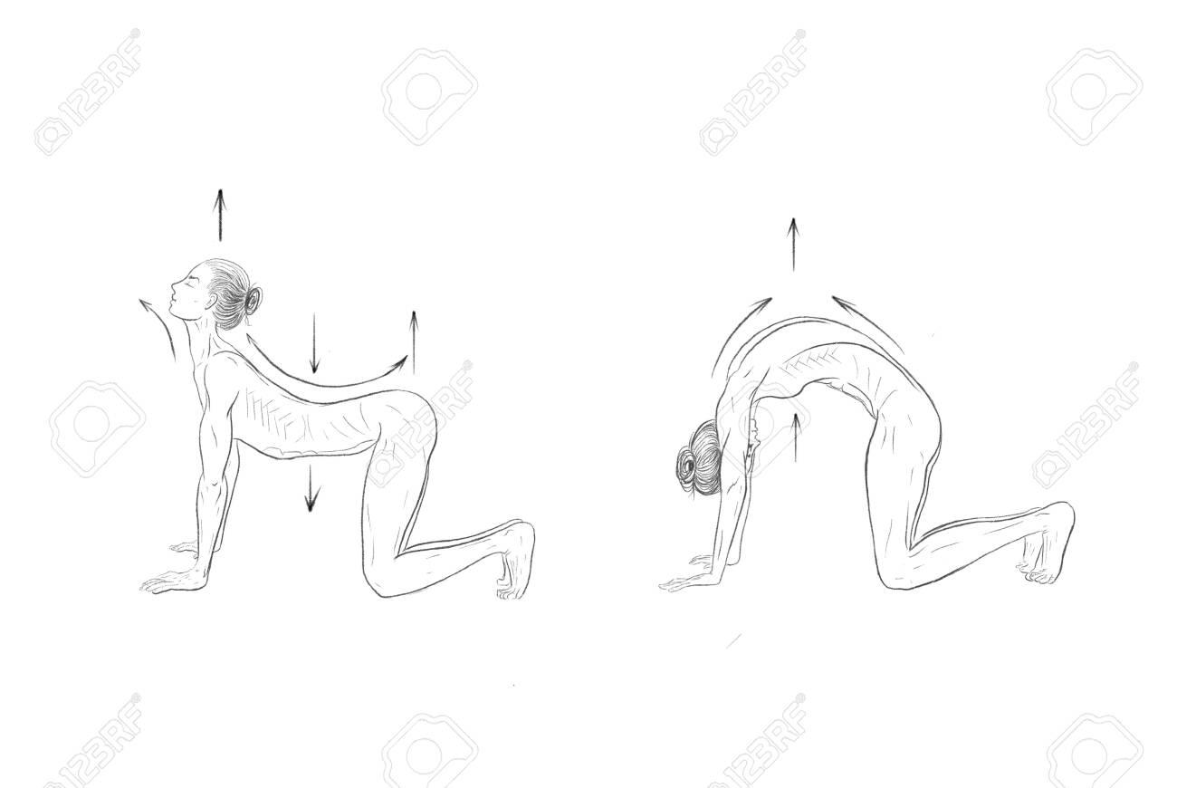 Illustration of the yoga poses (asanas) - 148107087