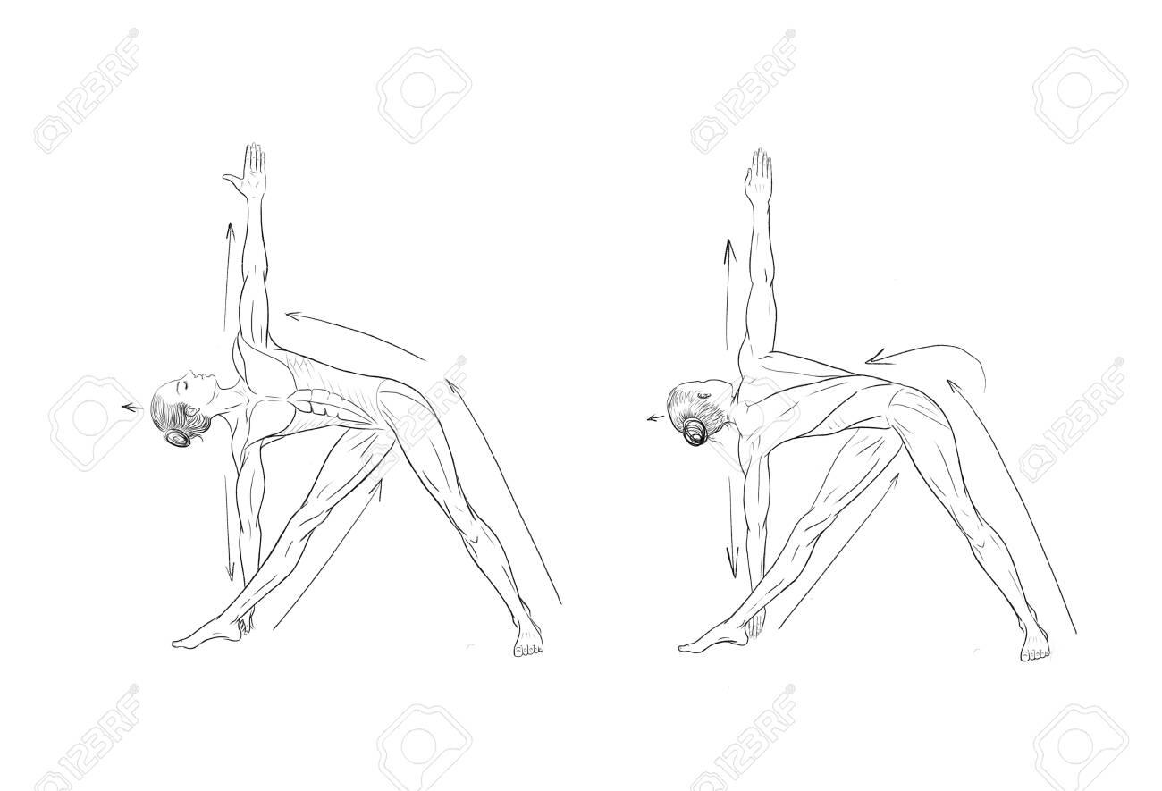 Illustration of the yoga poses (asanas) - 147877345
