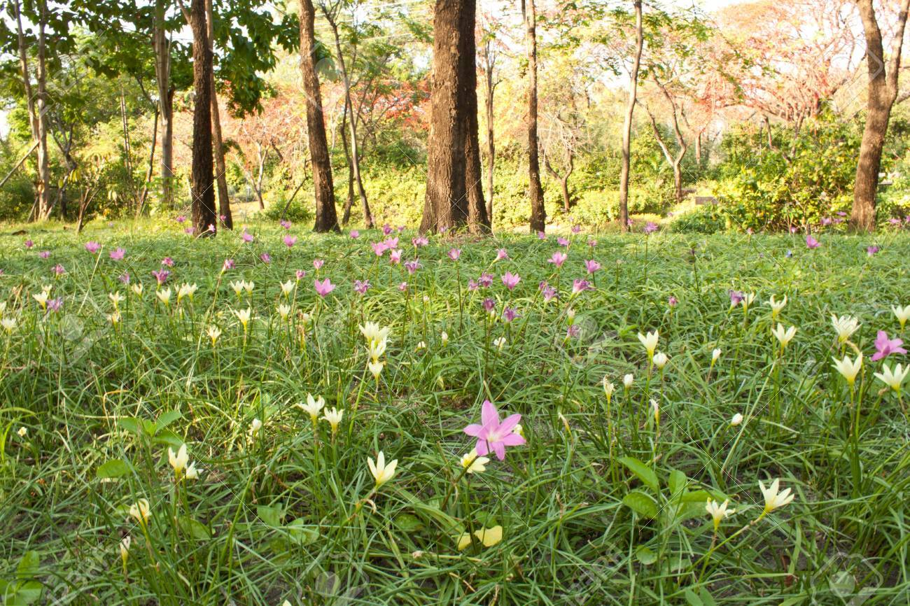 Beautiful flowers field in the park bangkok, Thailand Stock Photo - 8800094