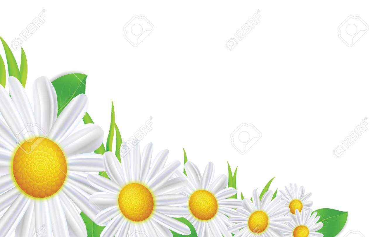 Flores De Primavera Marco De Composición. Diseño De Fondo De Verano ...