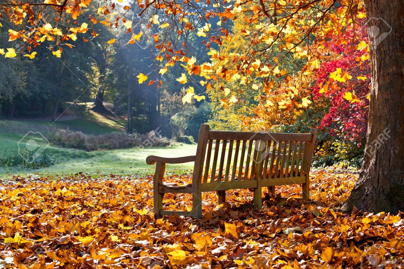 Bench In Autumn Park Autumn Landscape Stock Photo Picture And