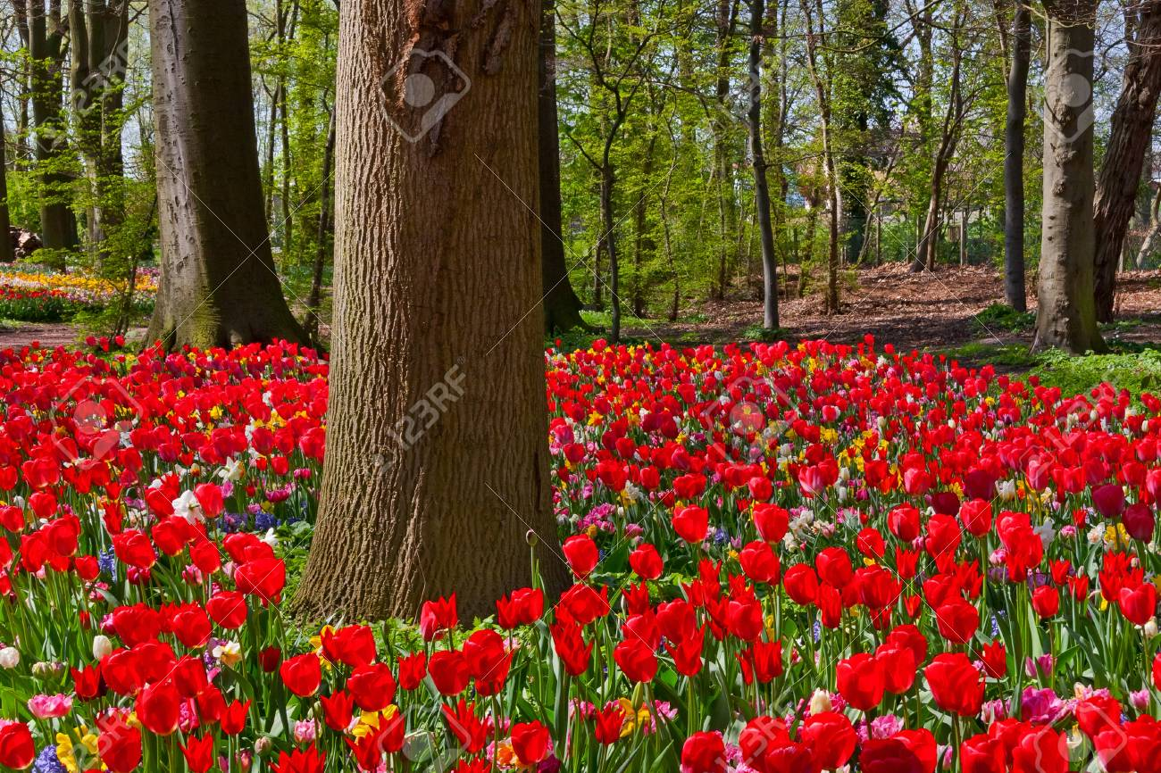 Tulips and narcissus in the park  Spring landscape Stock Photo - 18658549