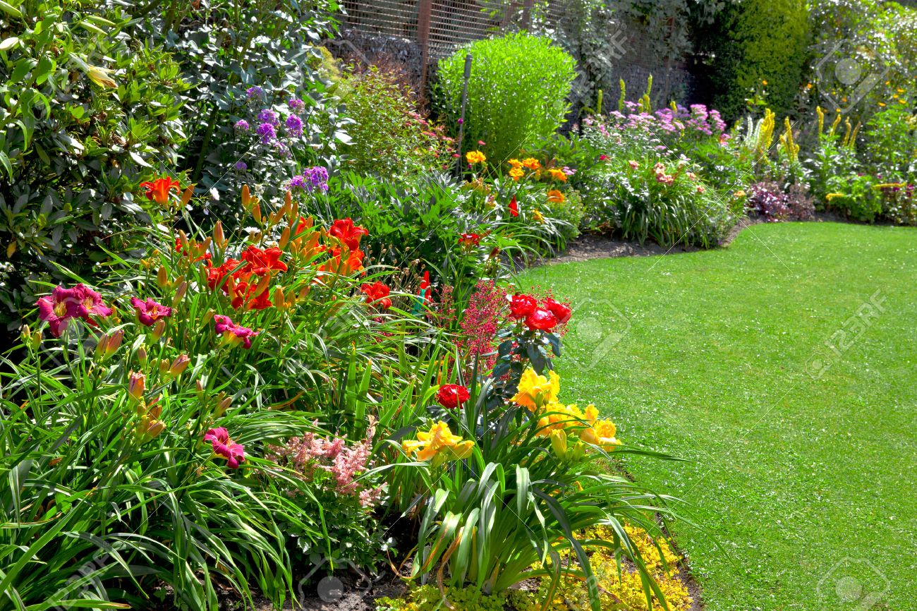 Фото цветы для сада и дачи